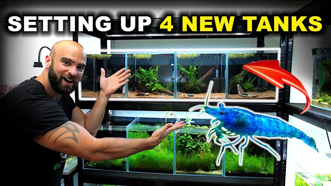 SETTING UP 4 New STUNNING Aquariums For SHRIMP!! (nano planted tank rack)