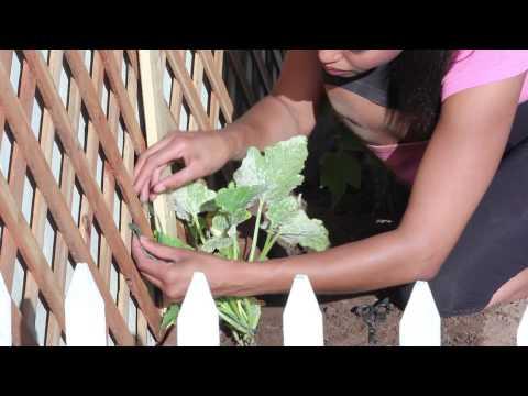 How to Create a Vertical Garden : Around the Garden