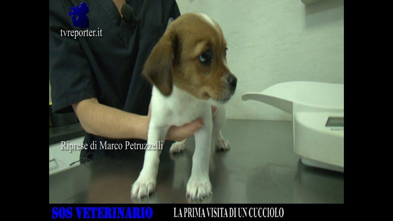 Sos Veterinario La Prima Visita Di Un Cucciolo Youtube