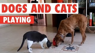 Dogs and Cats Playing | Unlikely Friends