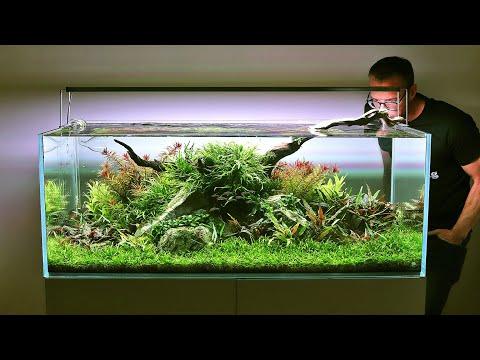 Aquascaper 1200 - New Fish And Controversial Aquarium Advice...?