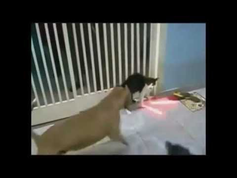 dog vs lightsaber sith cat fight youtube