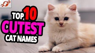 Cutest Cat Names  TOP 10 Cutest Cat Names For Male & Female!