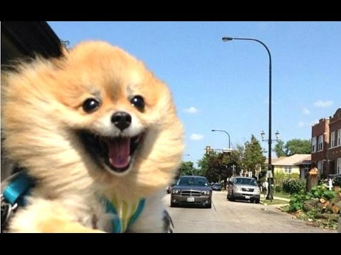 Dogs Funniest Videos Ever