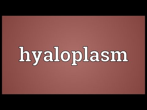 Header of hyaloplasm