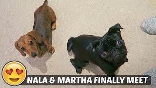 NALA & MARTHA FINALLY MEET!