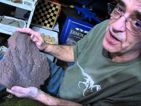 Discovering Fossils A Tony Angelo Film