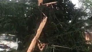 Молния расколола на две части дерево в Сочи