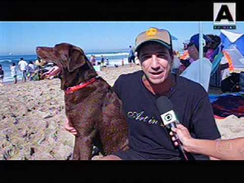 Bono, do Brasil, é tricampeão em campeonato de surfe para cães; Parafina também fica no pódio