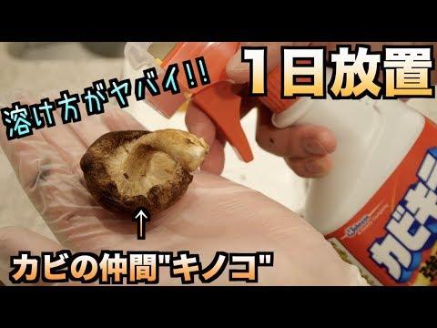 神秘的!!キノコをカビキラーに漬けて1日放置したら。。。