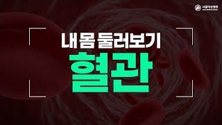 혈관 [내 몸 둘러보기]