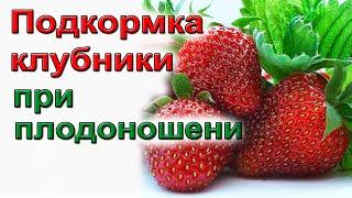 Клубника. Обязательные подкормки при цветении и плодоношении.