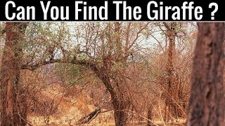 Can You Find All The Hidden Animals | Optical Illusions | Brain Teasers