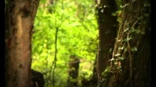Csodabogarak - Katicák (3.évad 6.rész)