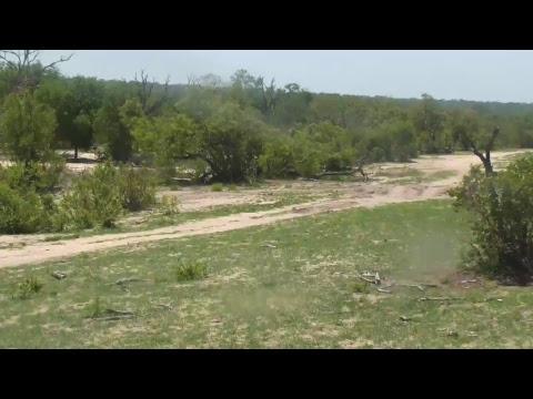 Djuma Private Game Reserve Live Stream