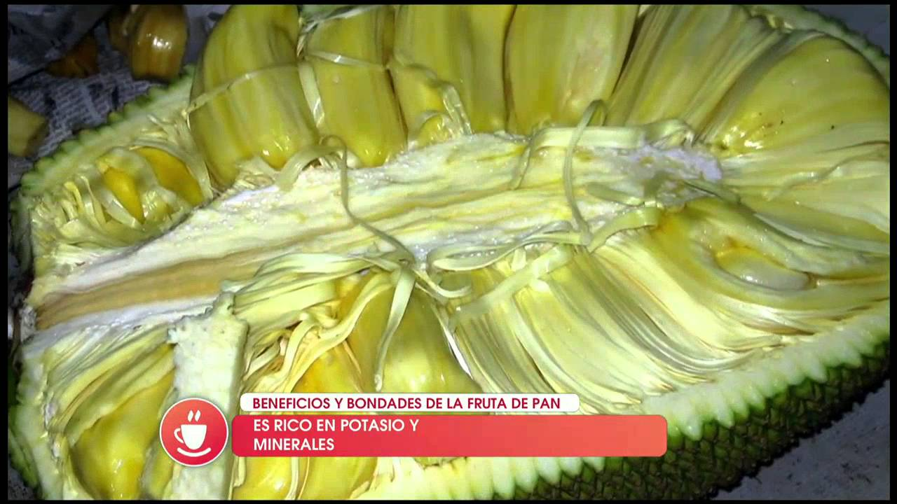 Los Beneficios Y Bondades De La Fruta De Pan Youtube