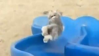 Смешные животные / ★