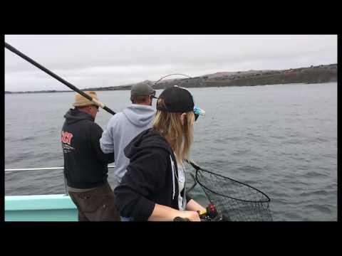 2016 Salmon -Bodega Bay Sport Fishing The New Sea Angler
