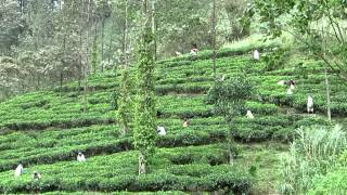 Sri Lanka Tea Estate and Meditation Centre (HD)