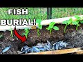 FISH BURIAL! *We couldn't save them*