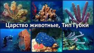 4. Тип Губки (7 класс) - биология, подготовка к ЕГЭ и ОГЭ 2018