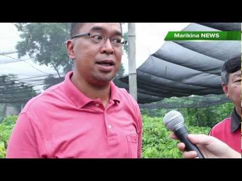 MARIKINA NEWS - SamPio, unang plant nursery ng cacao sa Marikina