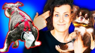 МУРАВЬИ УМЕРЛИ! КЛАДБИЩЕ МУРАВЬЕВ! Массовая смерть муравьев в формикарии Magic Family - Review hands on, tutorial and more of life video