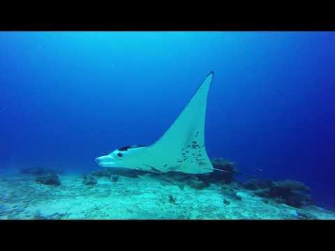 Palau 2018