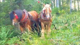 ťažne kone
