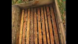 Лікування бджіл бипином