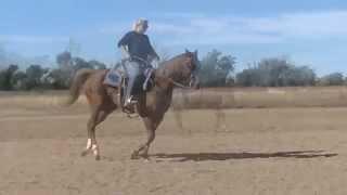 Posoli - *SOLD* AQHA Gelding Team Roping, Head horse, Well broke quiet and gentle!