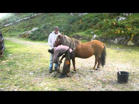 Horses at Macalla farm