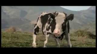 vive la vache qui fait du karaté