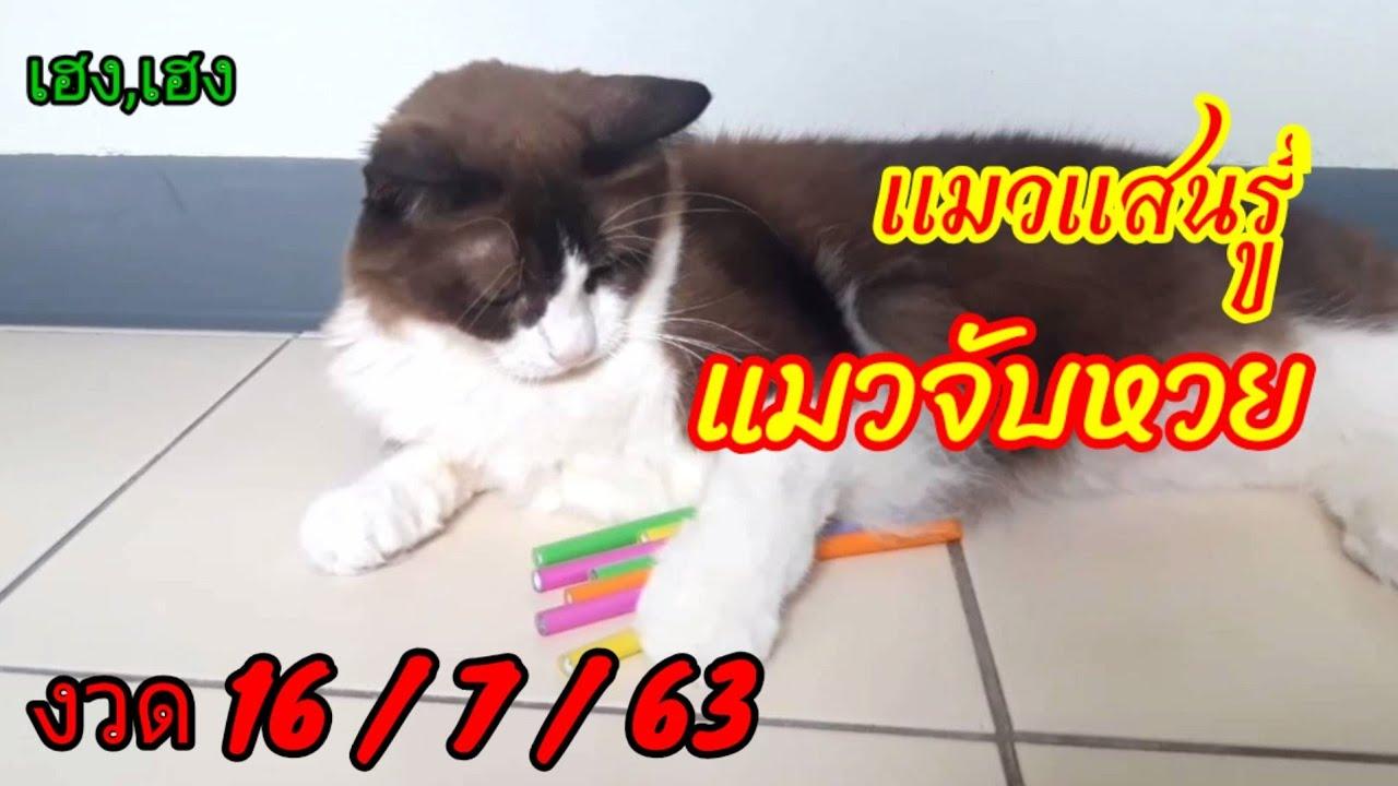 เฮง,เฮง แมวแสนรู้จับหวย งวด16/7/63