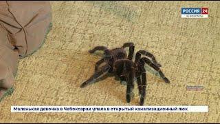Экзотические пауки, тараканы, скорпионы, сколопендры: чебоксарец коллекционирует необычных питомцев