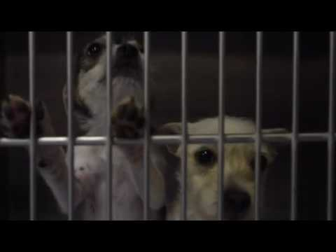 West Valley Humane Society Holiday Video