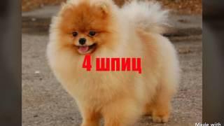 Топ 5 самых маленьких пород собак