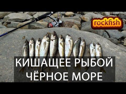 🐟Кишащее ставридой Чёрное море. Клёв как из пулемёта