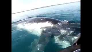 Кит играет с крохотной лодкой в открытом море