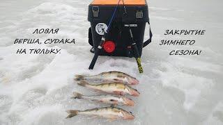 ЗИМНЯЯ РЫБАЛКА! Ловля БЕРША, СУДАКА на тюльку. Закрытие зимнего сезона.