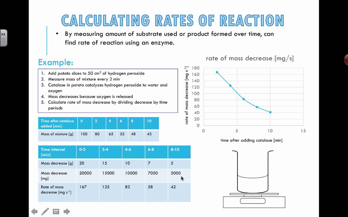 rate of reaction biology coursework
