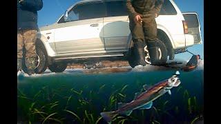 НАВАГА АТАКУЕТ КАМЕРУ рыбалка 2020 зимняя рыбалка