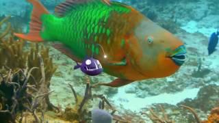 Рыбки Fishtales 2016 трейлер русский язык HD