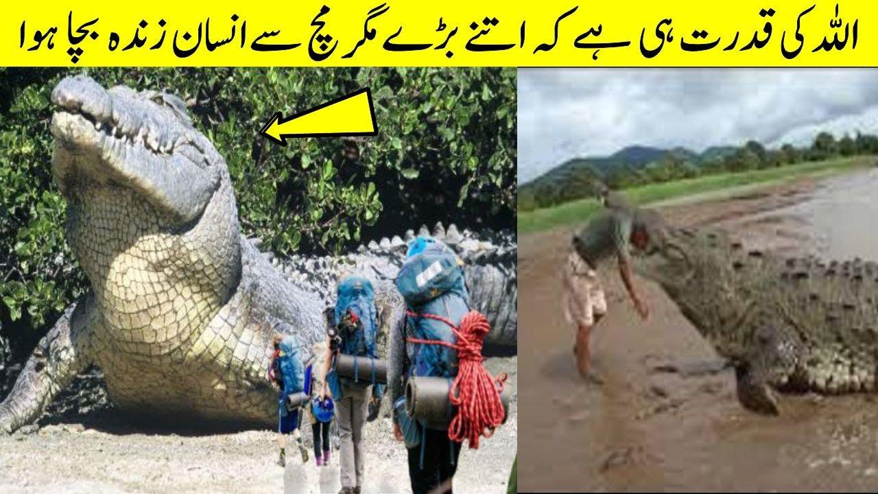 Unbelievable Giant Animals In The World | Biggest Animals
