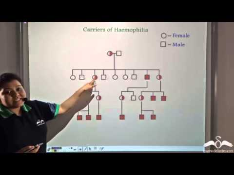 an introduction to hemophilia