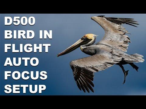 Nikon D500 Bird In Flight Autofocus System Setup