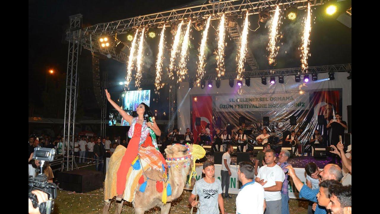 Ankaralı Ayşe Dinçer Ormana Festivali,Organizasyon Dünyası