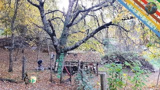 Il ciliegio più grande d'Italia?...Supergreen nel giardino di Luca Pappagallo (la sfida è aperta...)
