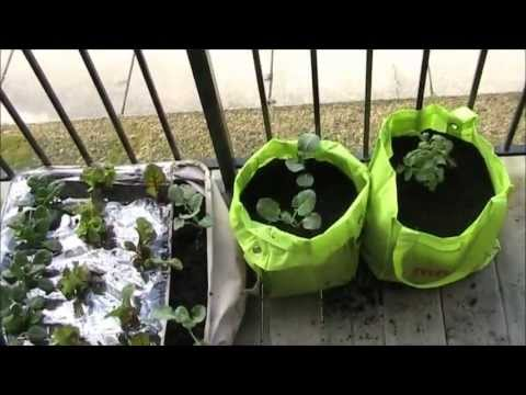 How to Make a Garden at Your Apartment or Condo for $15 EZ