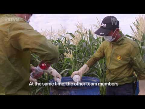Хайнан дахь фермерүүд хор цацах ажилд дрон ашиглаж эхэлжээ